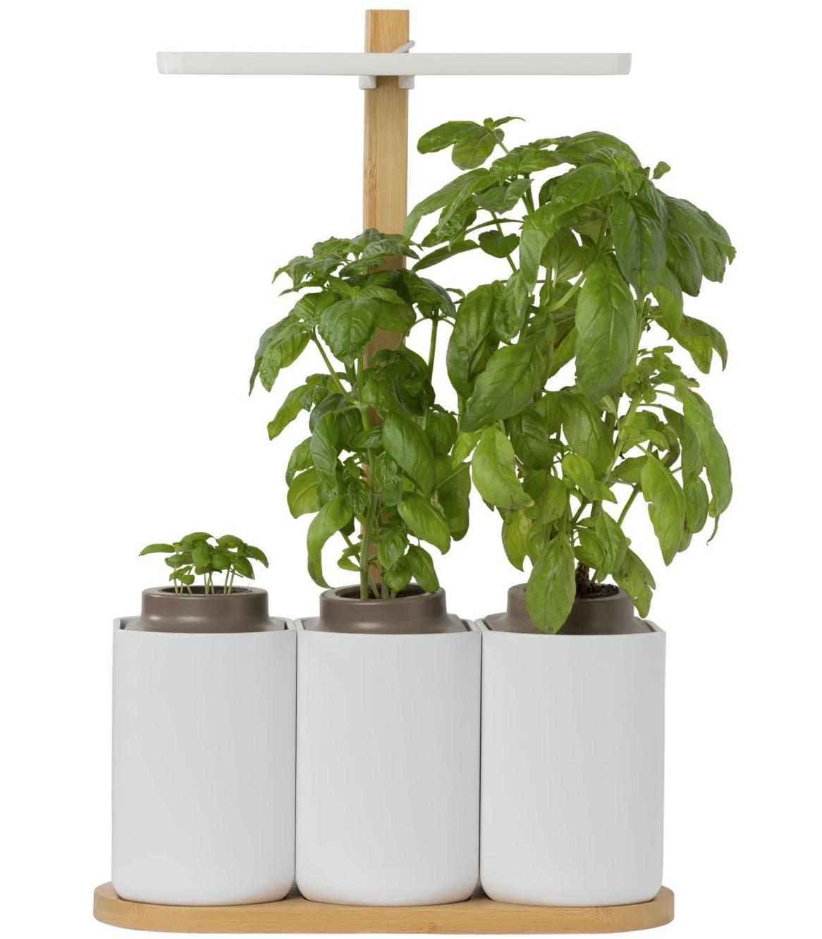 Plante D Intérieur A Faire Pousser jardin d'intérieur connecté prêt à pousser smart lilo à 99